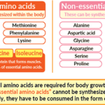The Importance of Essential Amino Acids